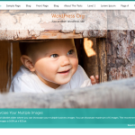 Premium Wordpress Theme ButterBelly